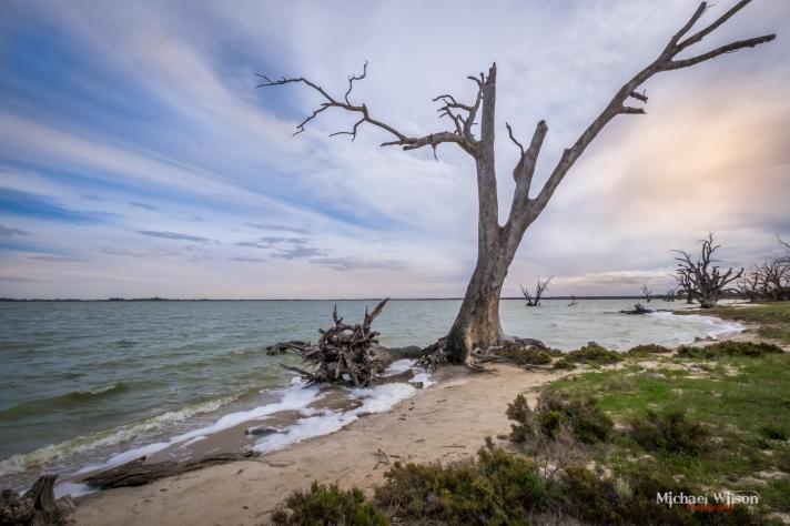 Bamera Tree Wacom Retouch