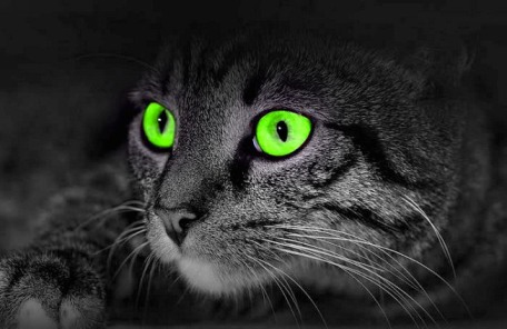 cat night vision